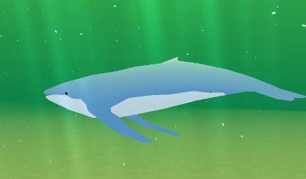 クジラ育成